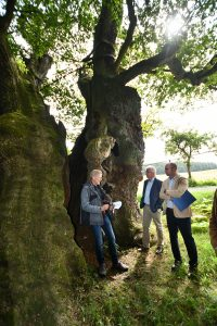 Read more about the article Naturdenkmal – 1000 jährige Eiche bei Borlinghausen erhalten